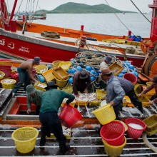 TO GO WITH AFP STORY 'Thailand-trafficking-rights-Myanmar-Cambodia,FEATURE' by Kelly Macnamara Photo taken on September 1, 2011 shows migrant laborers sorting fish as they work on a Thai fishing boat in Sattahip, Thailand's Rayong province. Thousands of men from Myanmar and Cambodia set sail on Thai fishing boats every day, but many are unwilling seafarers -- slaves forced to work in brutal conditions under threat of death. AFP PHOTO / Nicolas ASFOURI (Photo credit should read NICOLAS ASFOURI/AFP/Getty Images)