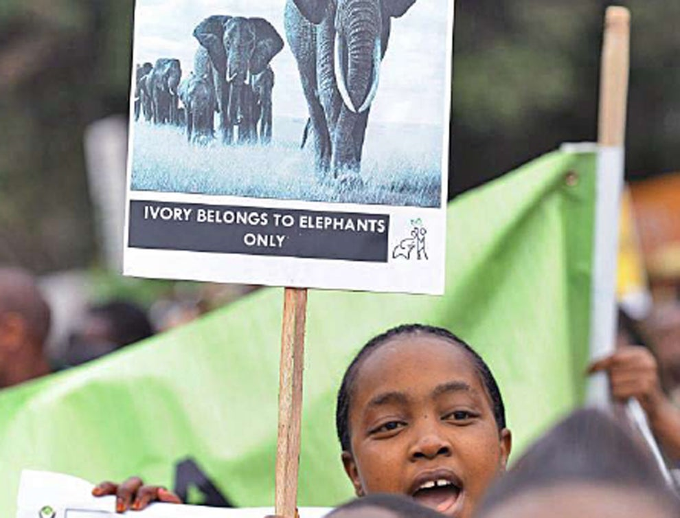 elephantposter - How conservation can benefit from new approaches to environmental sustainability