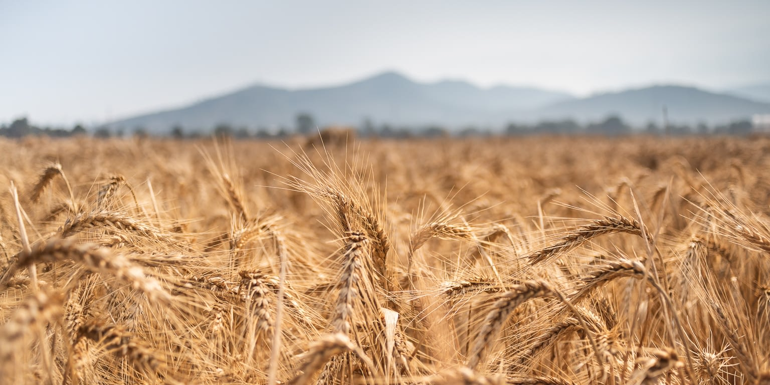 CIMMYT.2019.10.30.0001.MEX .AC  - Strengthening Intra-African Agricultural Trade
