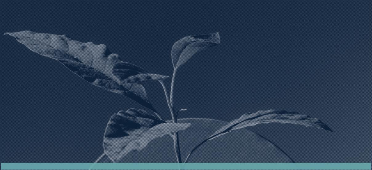 ST Wordpress - Sustainability Today Report